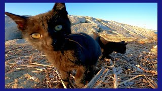 浜辺で元気に遊ぶ子猫の黒猫兄弟が可愛過ぎる