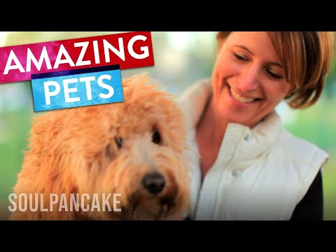 What We Learn From Our Pets | SoulPancake Street Team