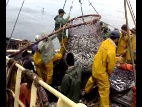 péche du sardine (safi maroc)