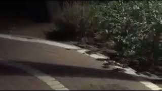 ליצן חמוש בסכין במרכז אורן בשכונה ד / צילום וואצאפ / ברנז'ה חדשות