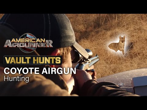 Airgun COYOTE Hunting | VAULT HUNTS