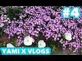 Week 4 : YAMI x VLOGS