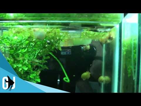 Best fish for aquarium plants -  201 Cheap Alternative To Plastic Aquarium Plants Tank Tip Youtube