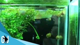 #201: Cheap Alternative To Plastic Aquarium Plants - Tank Tip