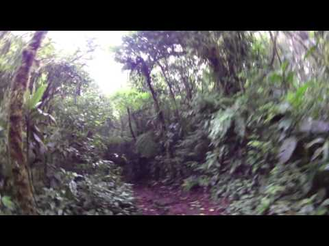 Costa Rica Monteverde Cloud Forest Hike Sendero Wilford Guidon Part 3 at LeaningTraveler.com