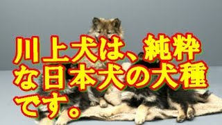説明 引用 yahoo japan 関連動画 落ち着けw - 川上犬 https://www.youtu...