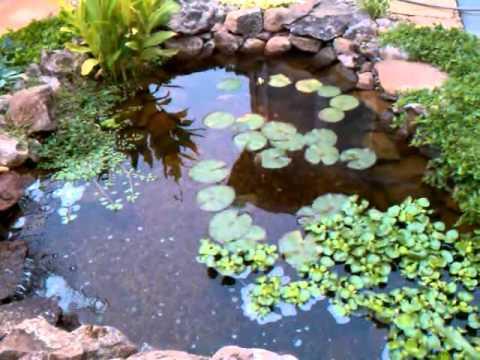 Backyard Pond Fall 2010 Youtube