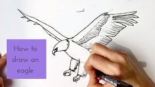 How to Draw a Bald Eagle
