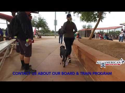 Board and Train Program Phoenix HARVEY