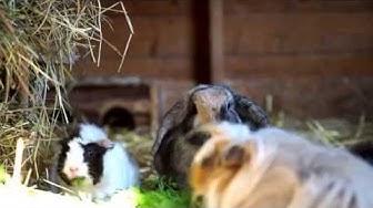 Kleintiere aus dem Tierheim Bad Reichenhall