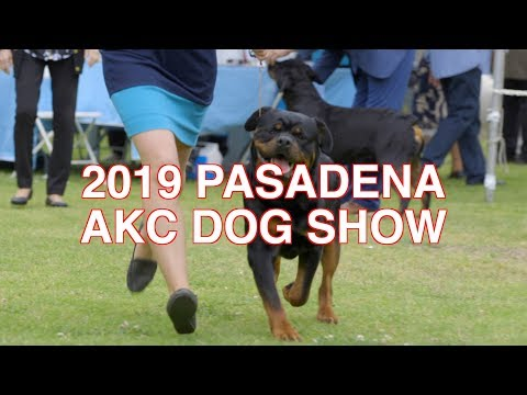 2019 PASADENA AKC DOG SHOW HIGHLIGHTS