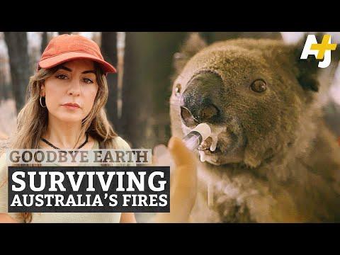 The World's Only Koala Hospital vs. Australia Bushfires