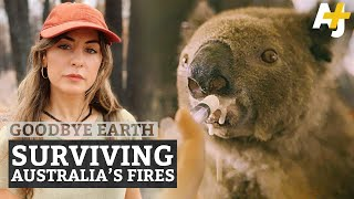 The World's Only Koala Hospital vs. Australia Bushfires