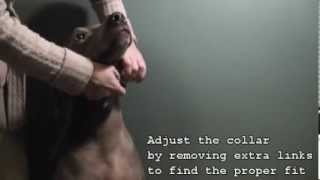 How To Put On (fitting) A Prong / Pinch Collar On A Dog