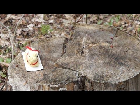The Butter Lamb meets Springfield XDm 45