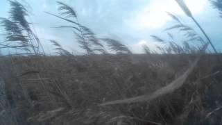 Охота на уток. Осень 2015. (Приморский край , оз.Ханка, разливы) Эпизод 1(, 2015-12-06T19:34:41.000Z)