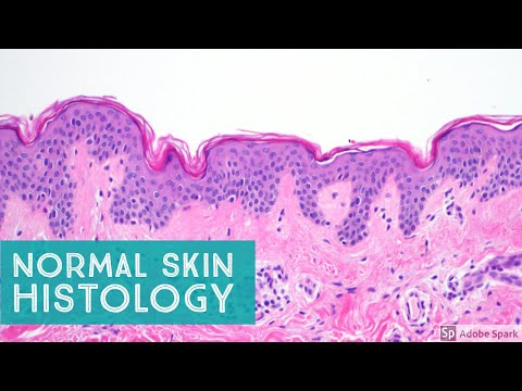 Normal Skin Histology - Explained by a Dermatopathologist