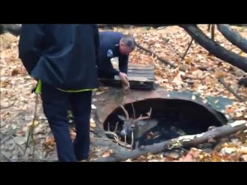 Ohio Police Rescue Two Bucks from Cistern