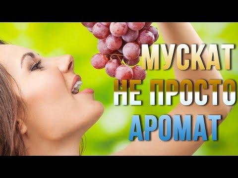 Мускатные сорта винограда. 10 гибридных форм с мускатным ароматом