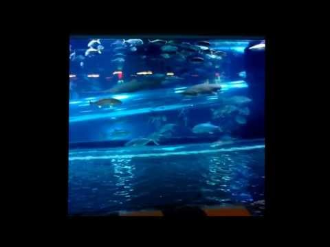 Swimming pools , sharks & aquariums