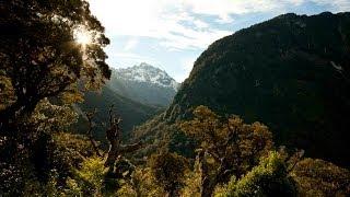 Poisoning Paradise - Ecocide New Zealand - Festival Version