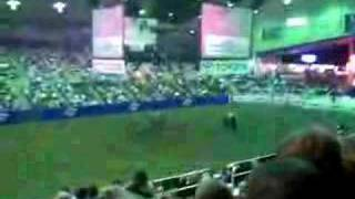 aussie chant at rodeo