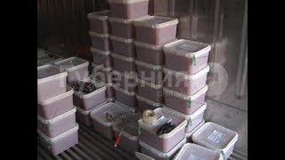 Партию икры за 9 млн рублей вывезли воры с хабаровского склада. Mestoprotv
