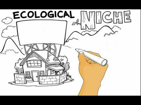 Ecological Niche - Whiteboard Animation