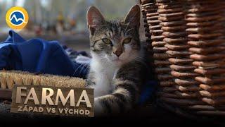 FARMA - Fyzické útoky, hádky, taktiky? Farma má väčší problém - mačacie zvratky!
