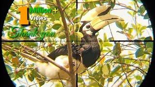 Berburu punai bertemu burung langka endemik Kalimantan