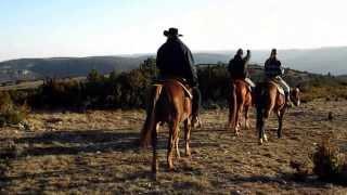 Ranch Randals bison à cheval