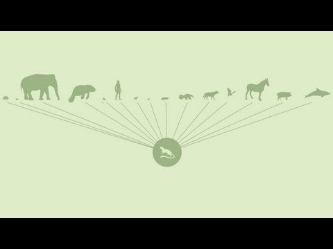 Science Bulletins: Ancestor of All Placental Mammals Identified