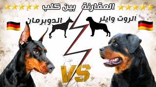 مقارنة بين الدوبرمان VS روت وايلر || فأي الكلبين تفضل ؟
