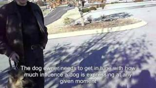 Dog Training - Taking back the Walk - pt 1