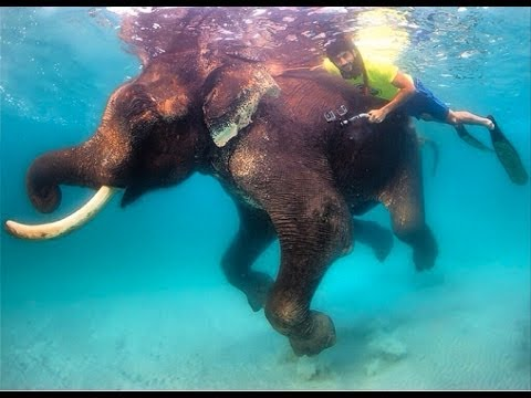 HH Sheikh Hamdan Goes Diving In Indian Ocean With Elephant