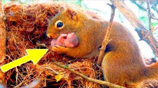 Desperate Squirrel Brings Her Babies To The One Place They Can Get Help