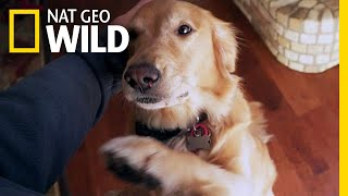 Will Your Dog Pick You Over a Stranger? | Nat Geo Wild