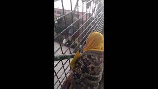 Monipur School girls Scandal