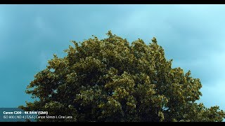 Canon C200 Review - 4K RAW Footage