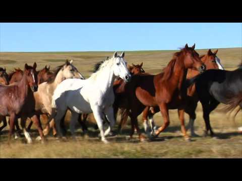 The Revelation Song (Barn Yard Worship) -Alan Curtis Tripp