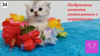 Подросшие котята знакомятся с игрушками #Кошки #Коты #Котята #Прикольные #Веселые