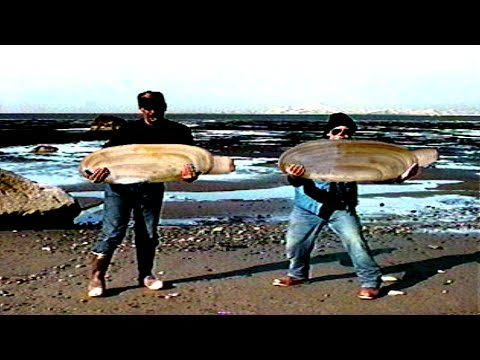 Top 5 Super Clams That Made It To The World Records