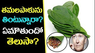 Amazing Health Benefits of Betel Leaves | Betal Leaf Benefits in Telugu l Best Health Tips in Telugu