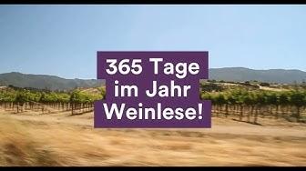 365 Tage im Jahr Weinlese!