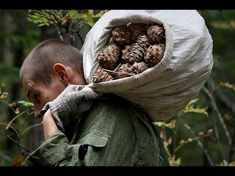 Чищу шишку, а там оре-орехи -орехи и я их ем.