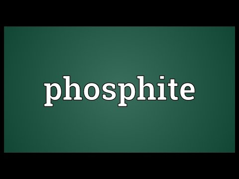 Header of phosphite