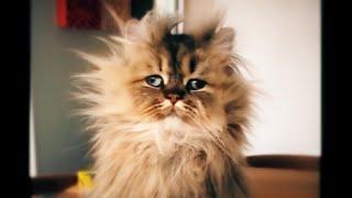 Лучшие смешные видео про животных Приколы с животными