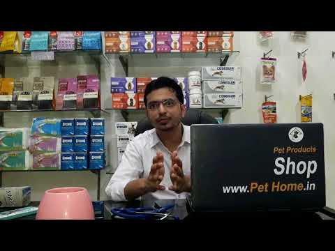 Liver Care of Dogs and Cats