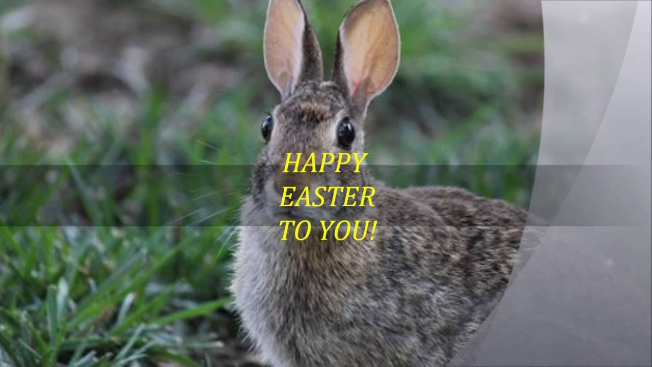 EASTER E Cards HAPPY SONG Best Popular Trending Like Happy Birthday To You Peter Cottontail