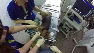 Реанимация у собаки